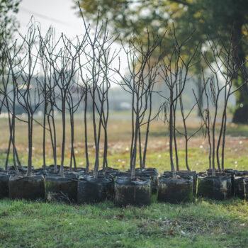 Impetus Digital is launching their tree planting program